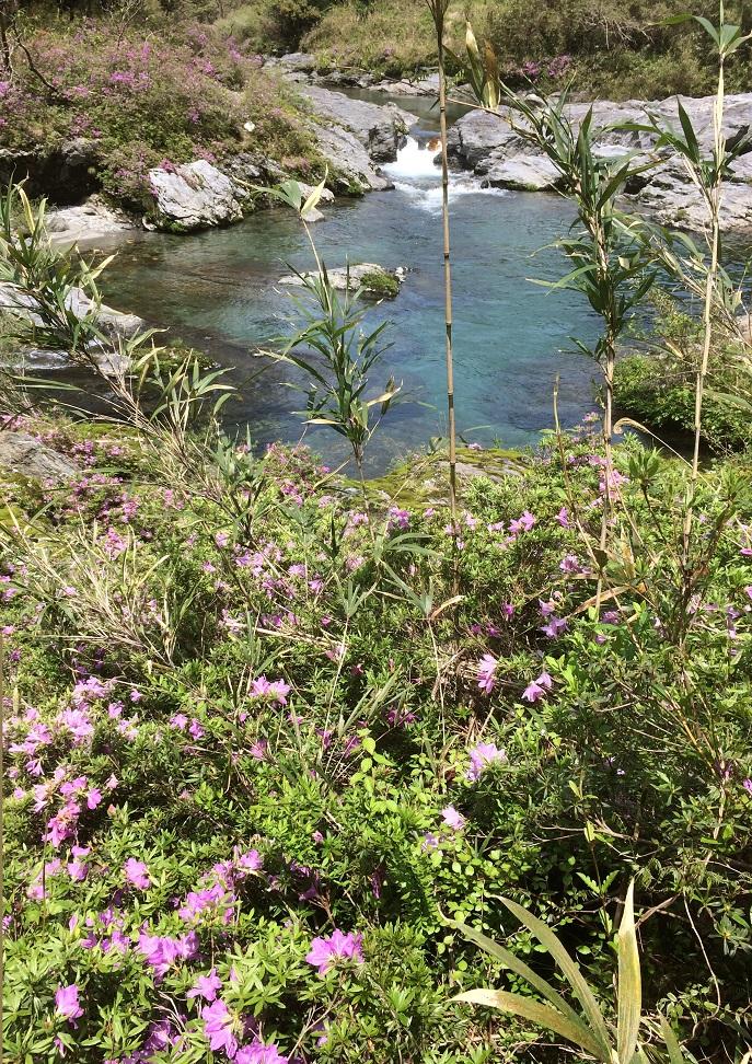 汗見川のお花たち