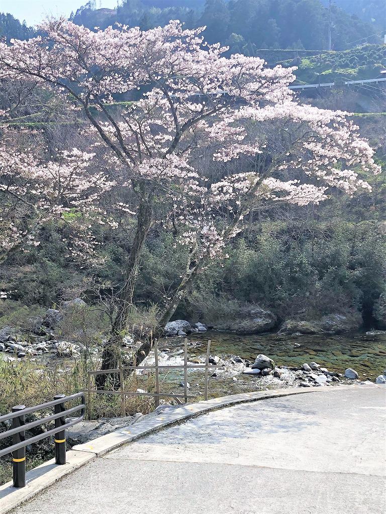 汗見川にも春がやってきました